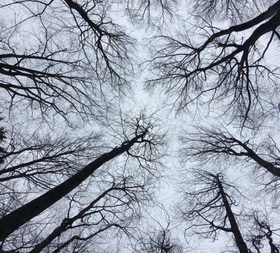 Tercie na fotografické túře vJizerskohorských bučinách